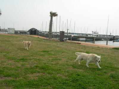 f:id:choshimarina:20070402131051j:image