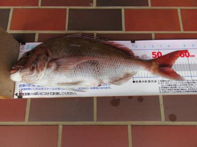 f:id:choshimarina:20170422141059j:image