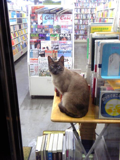 古本屋に猫がいた