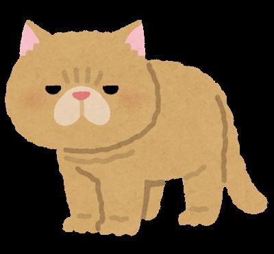 いらすとや エキゾチックショートヘアのイラスト(猫)