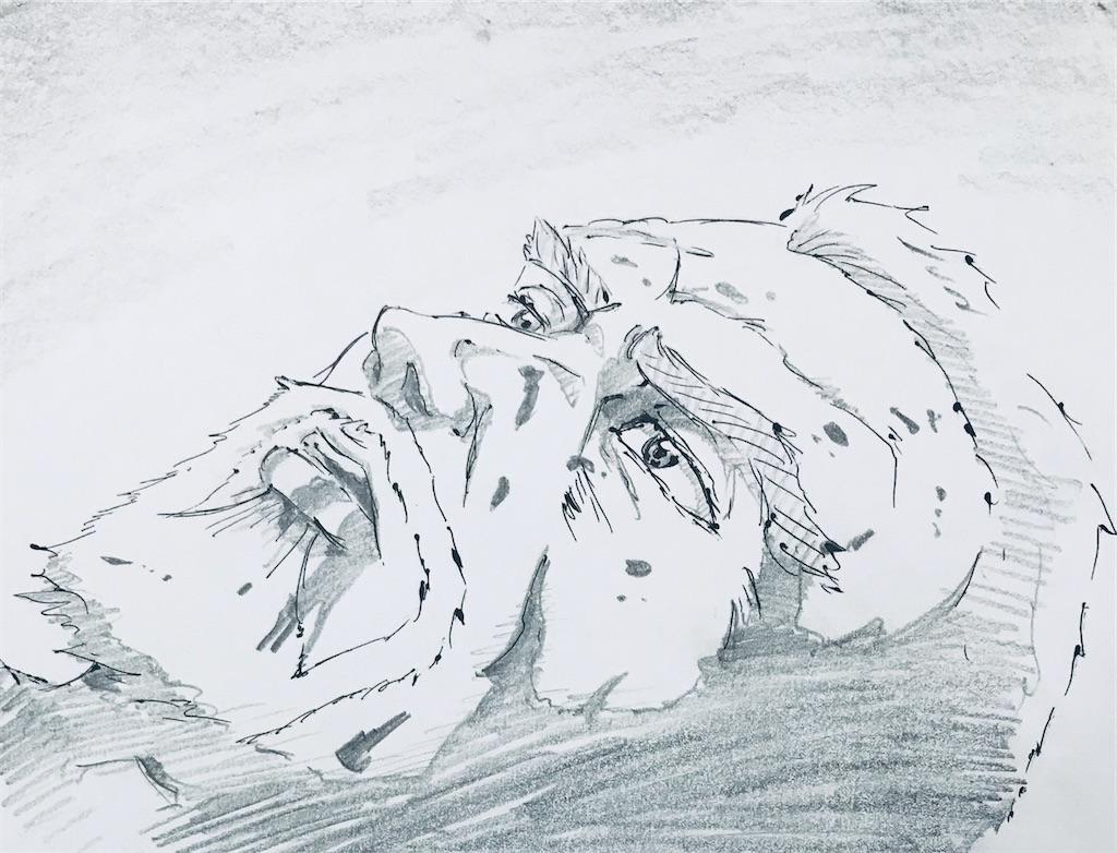 f:id:chukannsyoku:20200101210825j:image