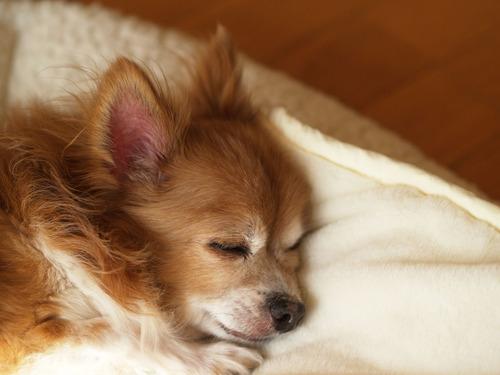 愛犬たくと 染矢敦子ブログ