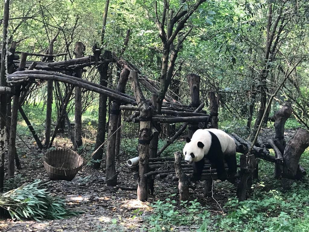 f:id:chunhua1223:20180726132436j:image