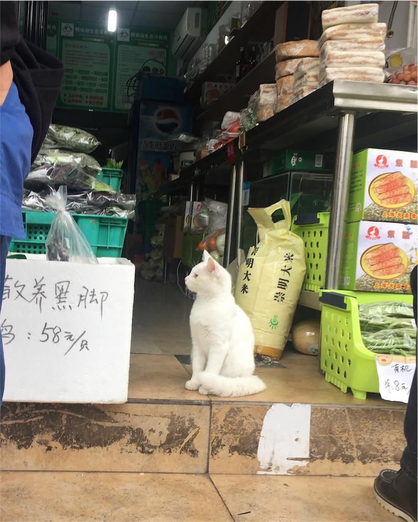 f:id:chunzi48:20161205081446j:image