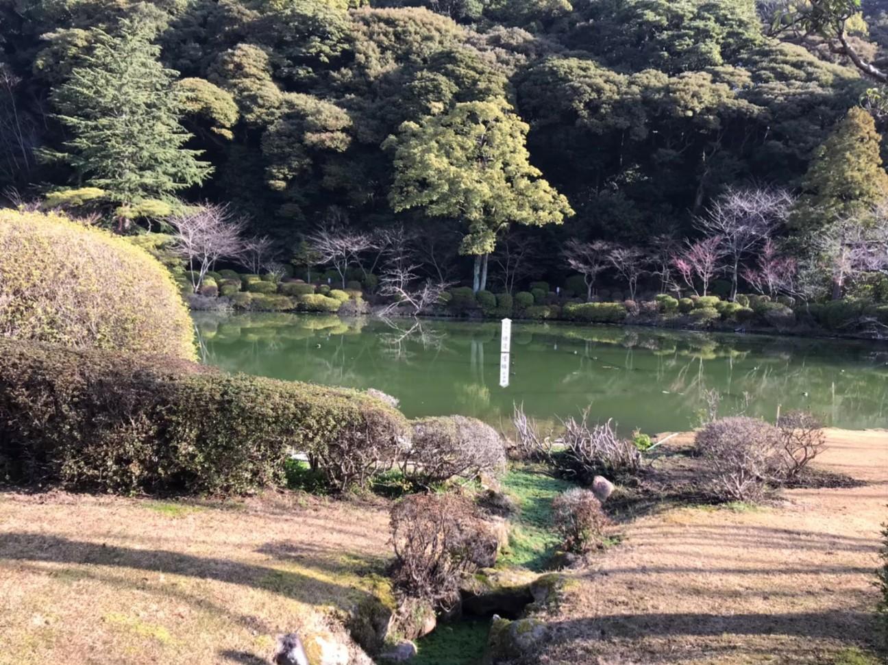 f:id:churaoki:20200603203440j:image