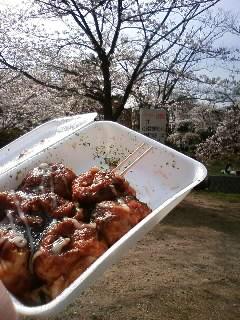 たこやきと桜