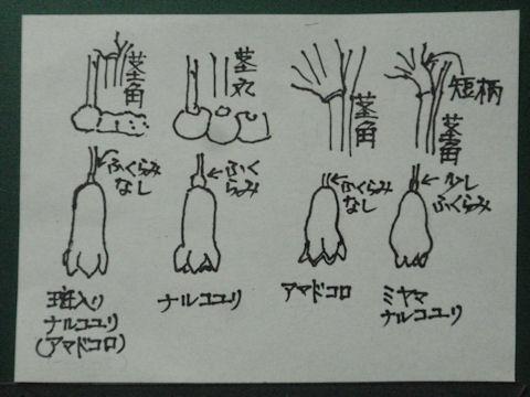 f:id:chuumeikun:20160615042437j:plain
