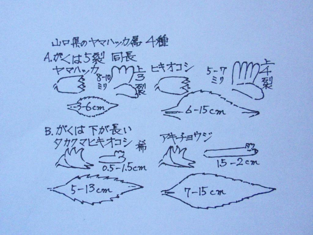 f:id:chuumeikun:20160713010503j:plain