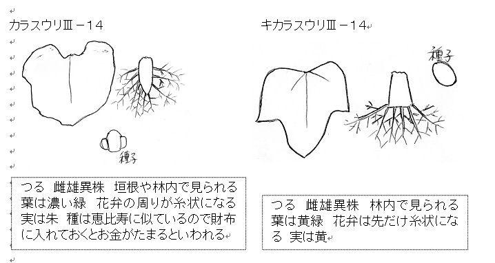 f:id:chuumeikun:20160722052259j:plain