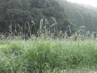 f:id:chuumeikun:20160724011121j:plain