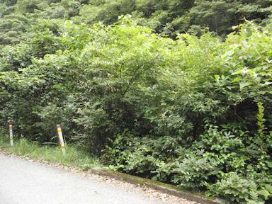 f:id:chuumeikun:20160726044136j:plain