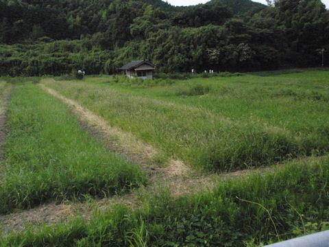 f:id:chuumeikun:20160730044722j:plain