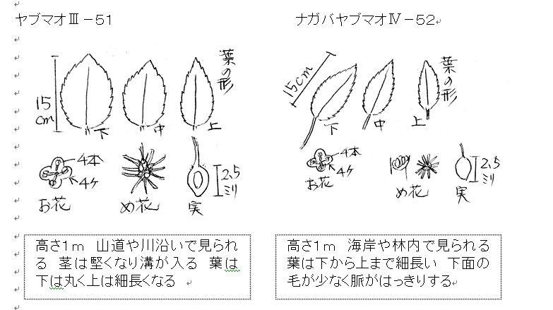 f:id:chuumeikun:20160731031338j:plain