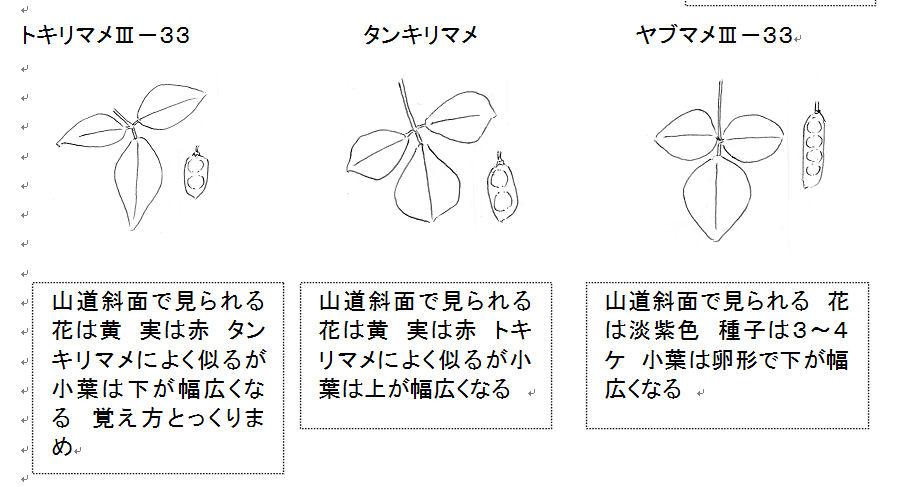 f:id:chuumeikun:20160805043541j:plain