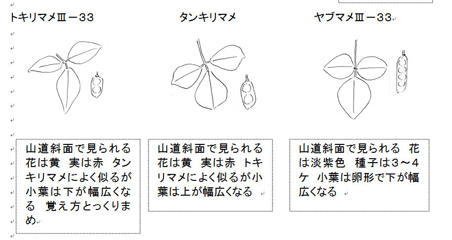 f:id:chuumeikun:20160806043125j:plain