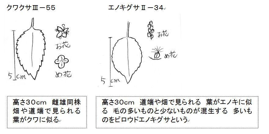 f:id:chuumeikun:20160825200807j:plain