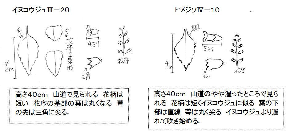 f:id:chuumeikun:20160828011329j:plain