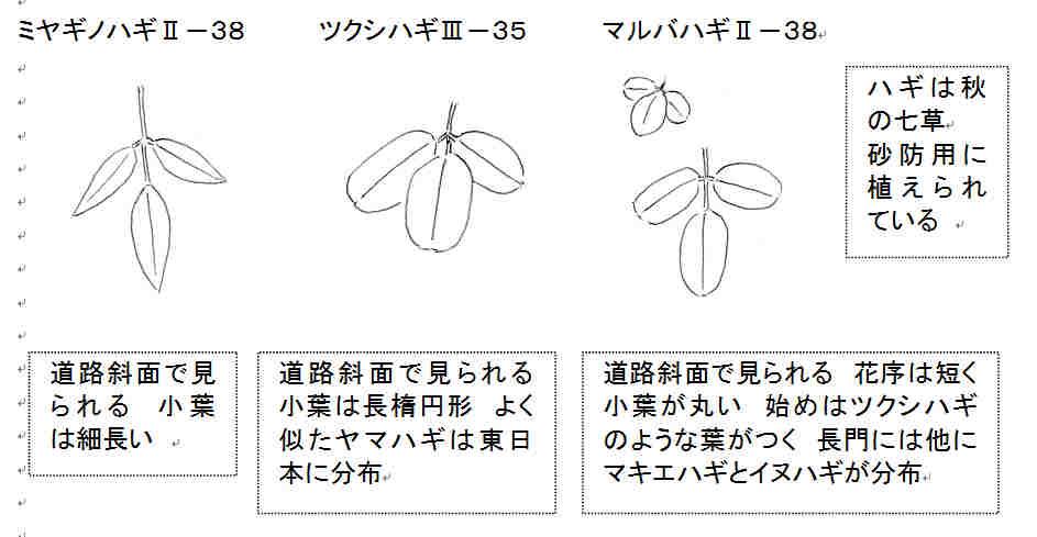 f:id:chuumeikun:20160904032345j:plain
