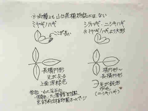 f:id:chuumeikun:20160905031655j:plain