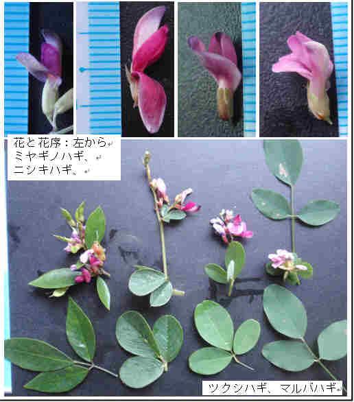 f:id:chuumeikun:20160905032847j:plain