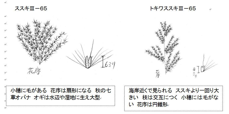 f:id:chuumeikun:20160909010529j:plain