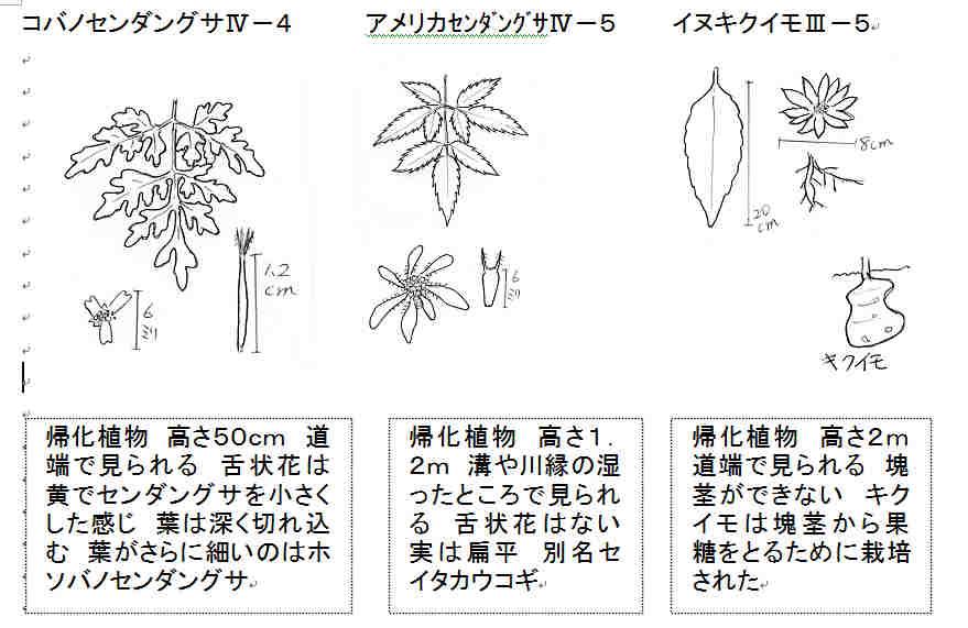 f:id:chuumeikun:20160928054844j:plain