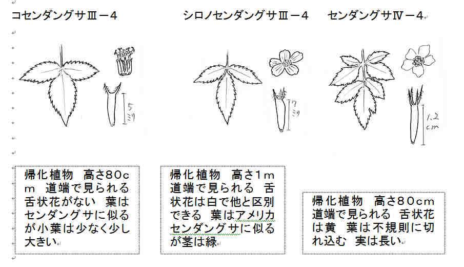 f:id:chuumeikun:20160929005650j:plain