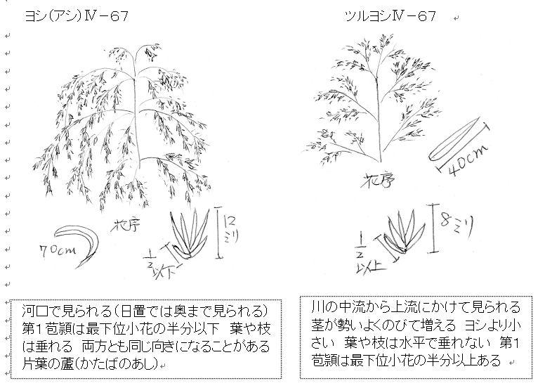 f:id:chuumeikun:20161014043420j:plain