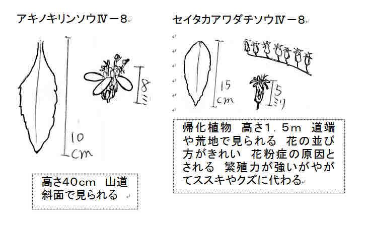 f:id:chuumeikun:20161022010020j:plain