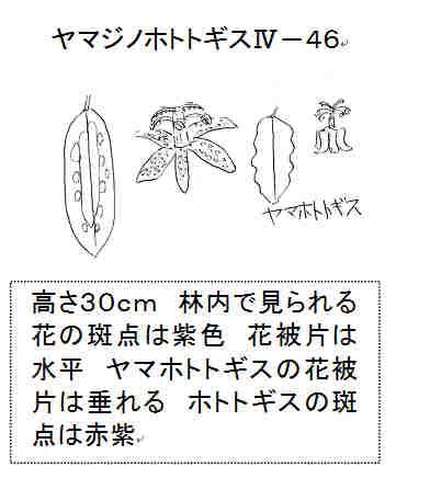 f:id:chuumeikun:20161024012337j:plain
