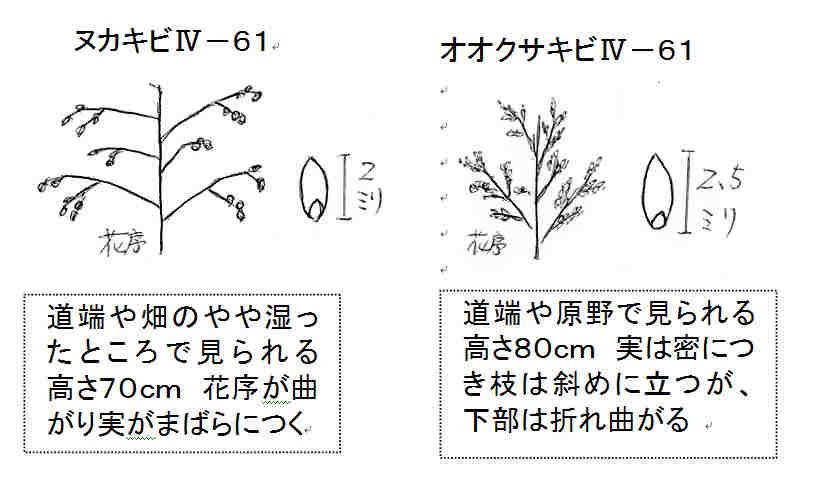 f:id:chuumeikun:20161107003816j:plain
