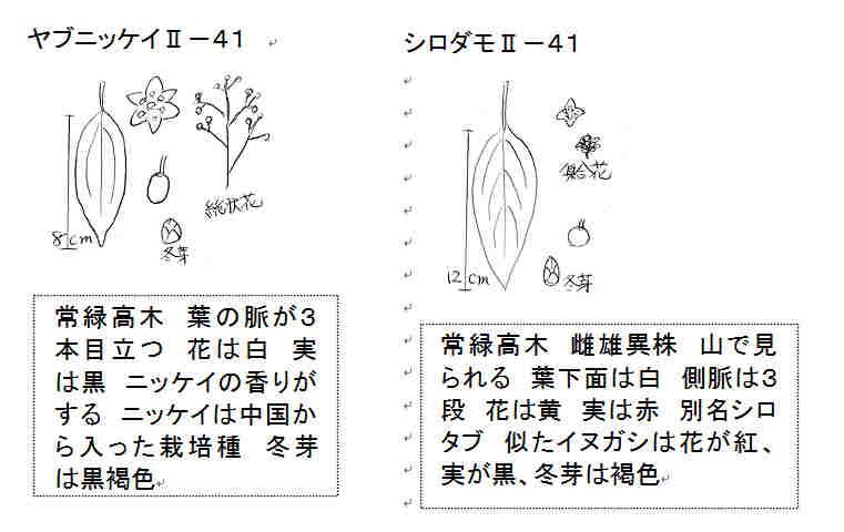 f:id:chuumeikun:20161110053031j:plain