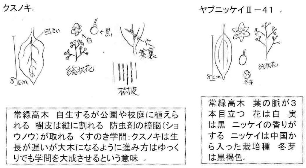 f:id:chuumeikun:20161111063611j:plain