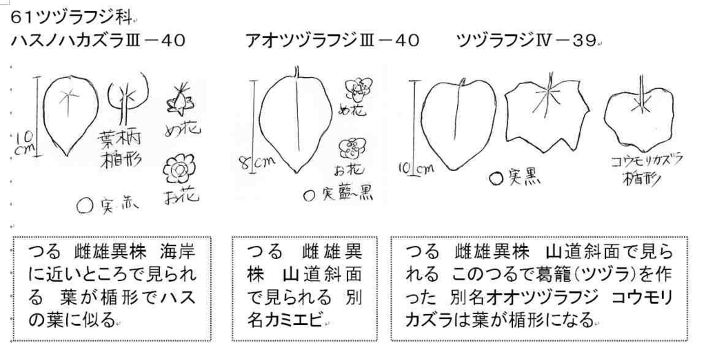 f:id:chuumeikun:20161112015004j:plain