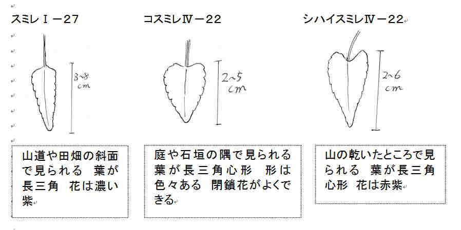 f:id:chuumeikun:20161116011356j:plain