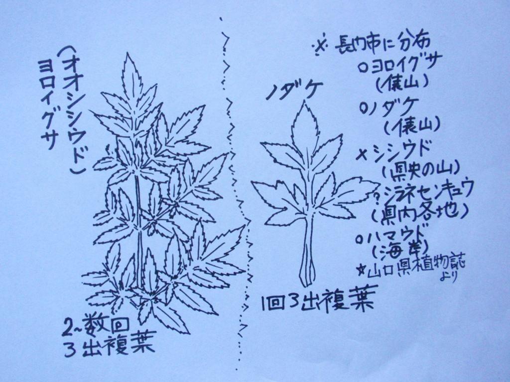 f:id:chuumeikun:20161118085223j:plain