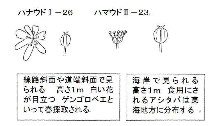 f:id:chuumeikun:20161118085422j:plain