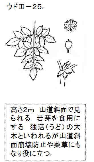 f:id:chuumeikun:20161119052259j:plain