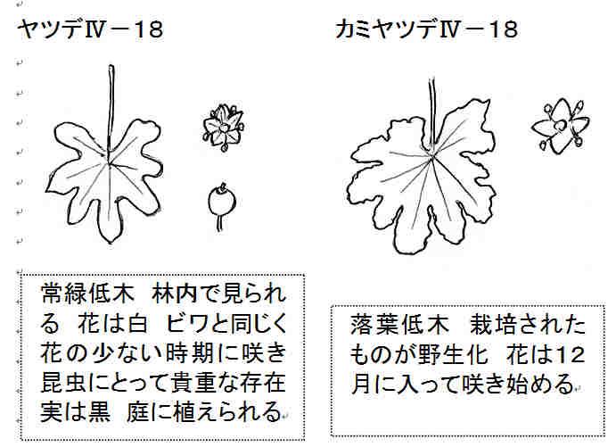 f:id:chuumeikun:20161120044113j:plain