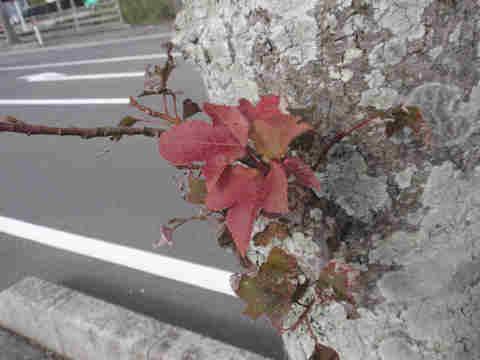 f:id:chuumeikun:20161126190055j:plain