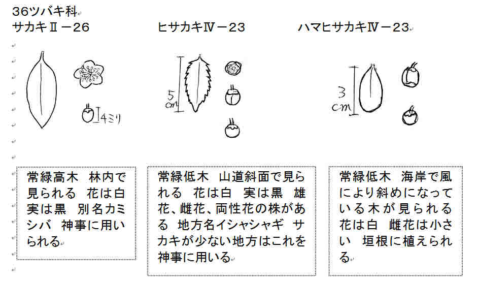 f:id:chuumeikun:20161209054605j:plain
