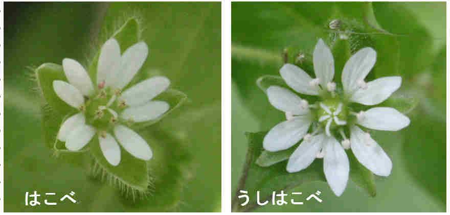 f:id:chuumeikun:20161228134923j:plain