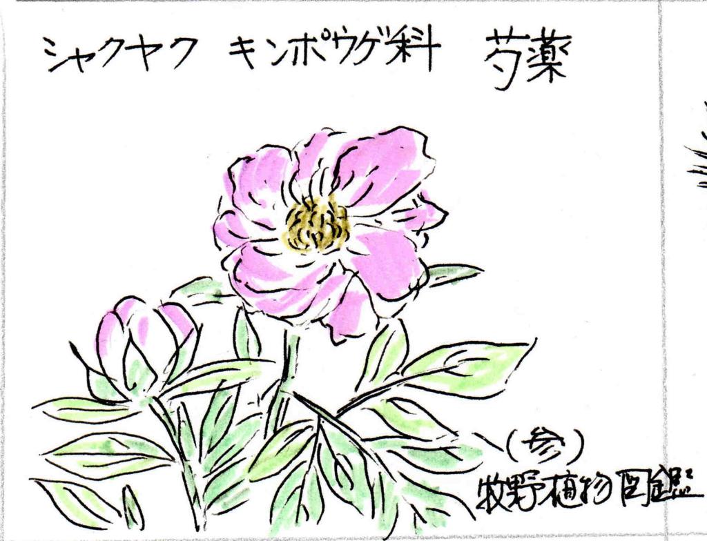 f:id:chuumeikun:20170108140616j:plain