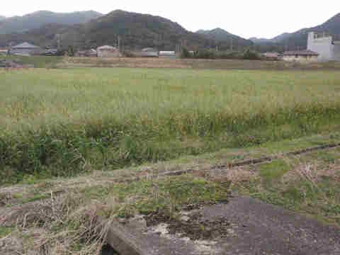 f:id:chuumeikun:20170113040042j:plain