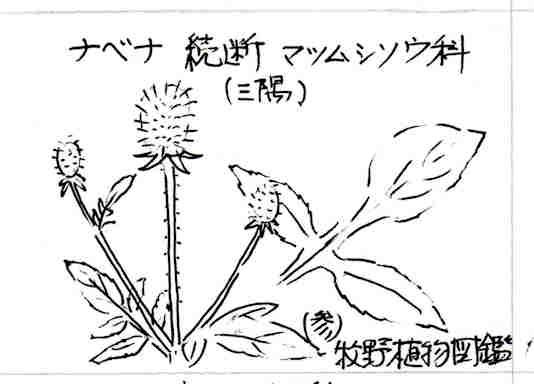 f:id:chuumeikun:20170117203150j:plain