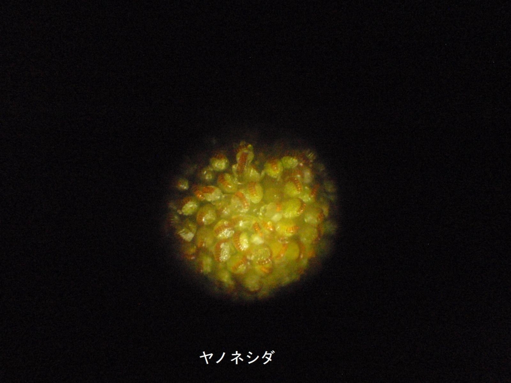 f:id:chuumeikun:20170206104145j:plain