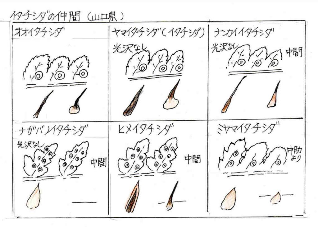 f:id:chuumeikun:20170213024126j:plain