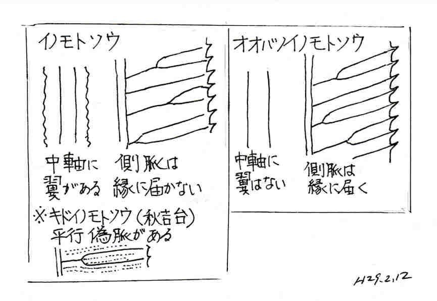 f:id:chuumeikun:20170214151746j:plain