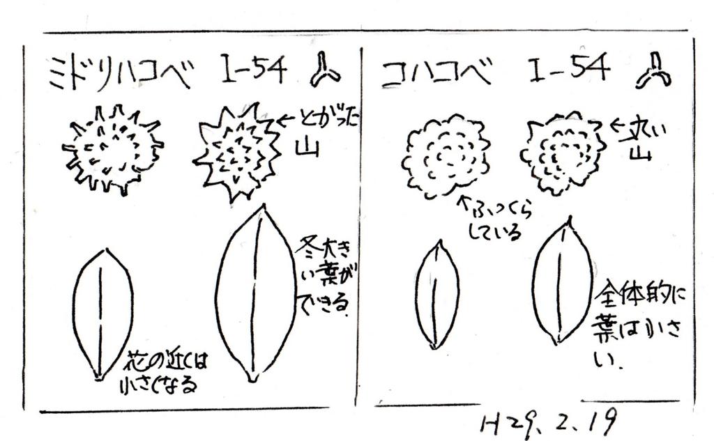 f:id:chuumeikun:20170223094920j:plain