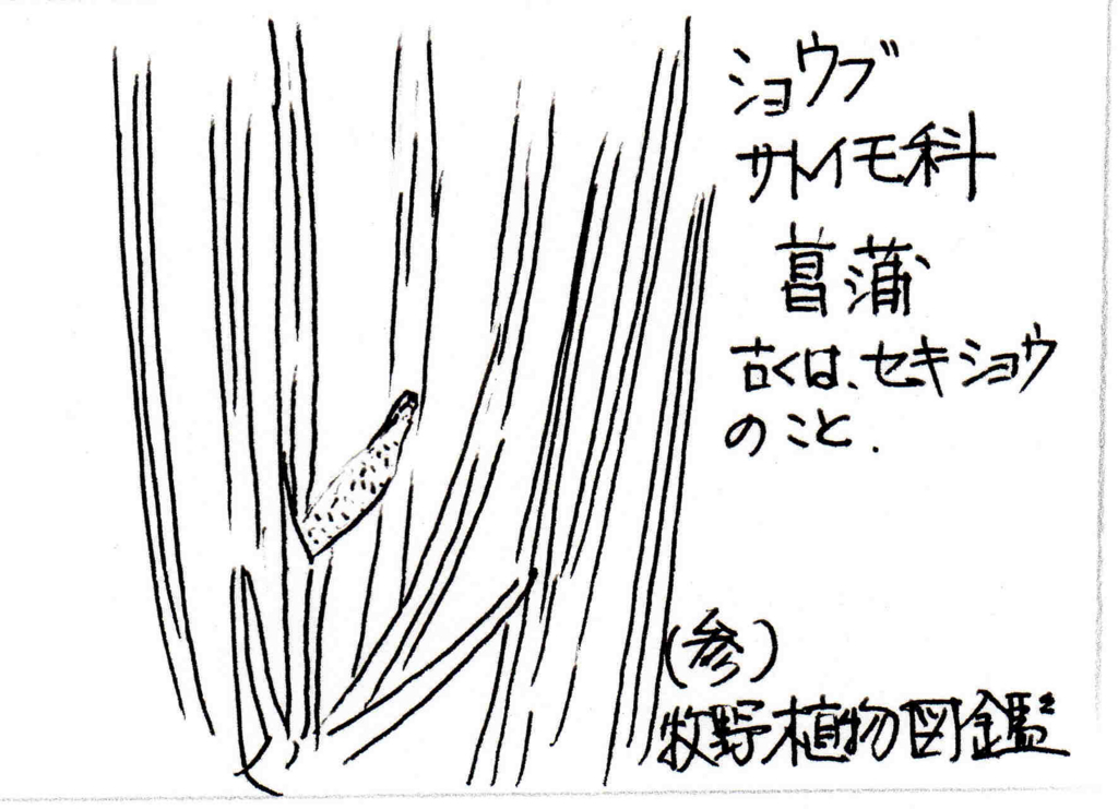 f:id:chuumeikun:20170228104714j:plain